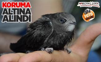 Siverek'te Ebabil kuşu bulundu!