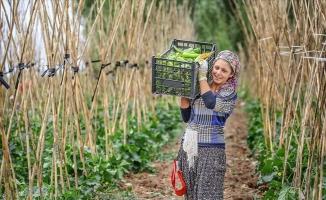 İyi Tarım ve Organik Tarım Destek Ödemeleri başlıyor