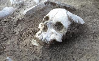 3500 yıllık insan kafatası ve uyluk kemiği bulundu