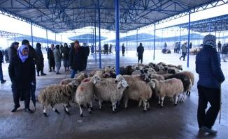 Hayvan pazarında esnafın ilk gün heyecanı