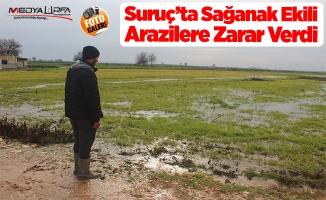 Şanlıurfa'da sağanak ekili arazilere zarar verdi