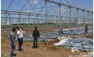 Viranşehir'de sera çalışmaları