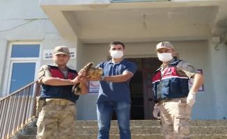 Halfeti'de yaralı bulunan şahin tedavi altına alındı