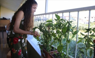 Kovid-19 sürecinde balkonlar seraya dönüştü