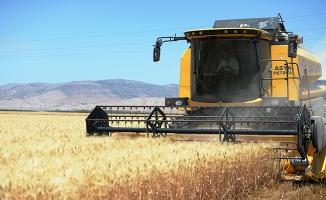 Mardin Ovası'nda bereketli buğday mesaisi