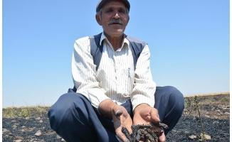 Siverek'te 40 dönüm buğday ekili alan yandı