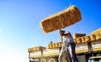 Balya işçilerinin zorlu ekmek mücadelesi