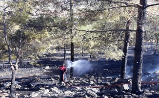 Şanlıurfa'da ağaçlık alanda yangın