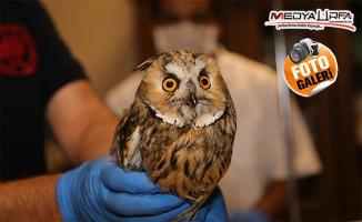 Tedavileri tamamlanan 25 yabani kuş doğaya bırakıldı