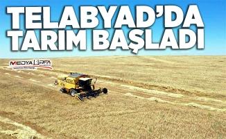 Tel Abyad'da ticaret başladı