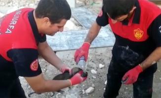 Kaya yığınının altında kalan yavru köpek kurtarıldı