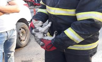 Otomobilin motoruna sıkışan kedi yavrusu kurtarıldı