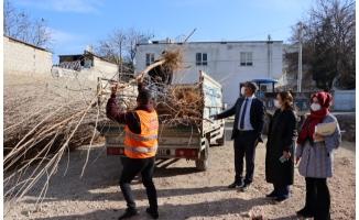 İpekböcekçiliği için dut ağacı dağıtımı başladı