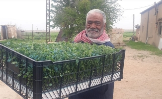 Barış Pınarı bölgesinde tarımsal çeşitlilik artırılıyor