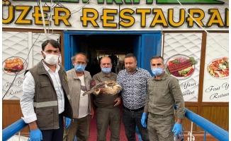 Halfeti'de yaralı kızıl şahin tedavi altına alındı