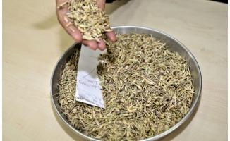 Şanlıurfa'da sezonun ilk arpa hasadı yapıldı