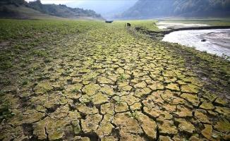 Her yıl 12 milyon hektar arazi kaybediliyor