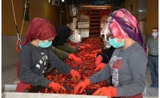 Türkiye'nin pul biber ihracatı 9 ayda yüzde 28 arttı