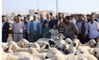 Başkan Çiftçi Hayvan Pazarında Satıcıları Dinledi