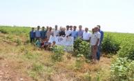 Harran'da Milli Tarım Projesi Hızla İlerliyor