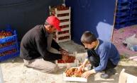 Hatay'daki Türkmenler çilek hasadına başladı