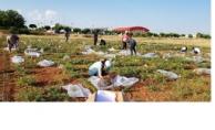 Harran Üniversitesinden Örnek Proje