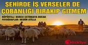 Siverekli Çobanın 55 Yıllık Hayat Serüveni