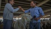 Hayvan Pazarlarında Kurban Bayramı Hareketliliği