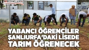 Yabancı öğrenciler Urfa'da tarım öğrenecek