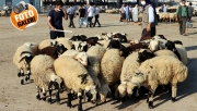 Şanlıurfa'da kurbanlıklar pazara indi