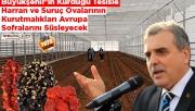 Urfa'nın kurutmalıkları Avrupa sofralarını süsleyecek
