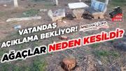 Viranşehir'de ağaçların kesilmesine tepki